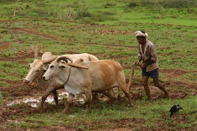 Farmers Plowing Fields