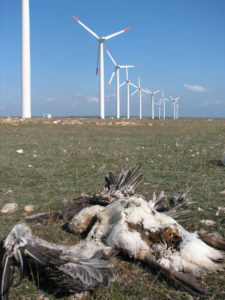 Windmills and dead birds