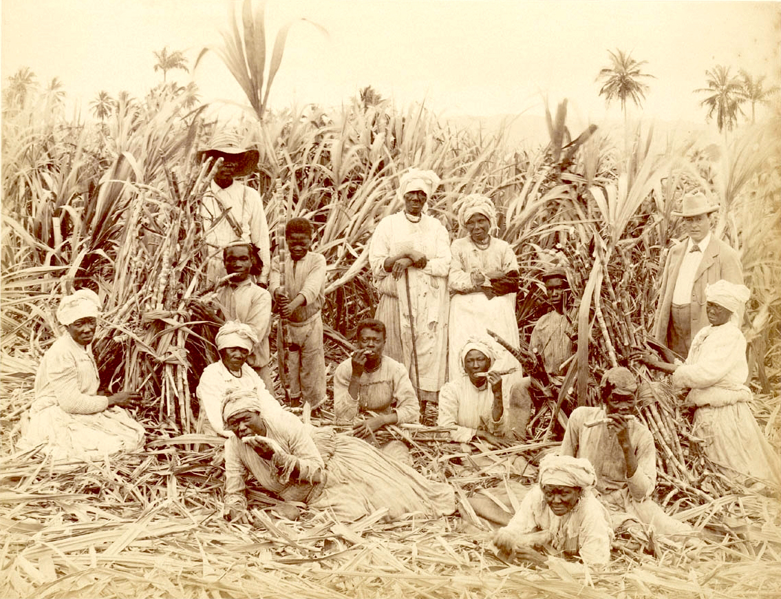 slavery in jamaica essay Historical context: american slavery in comparative perspective by steven mintz of the 10 to 16 million africans who survived the voyage to the new world, over one-third landed in brazil and between 60 and 70 percent ended up in brazil or the sugar colonies of the caribbean.
